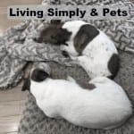 simple living and pets