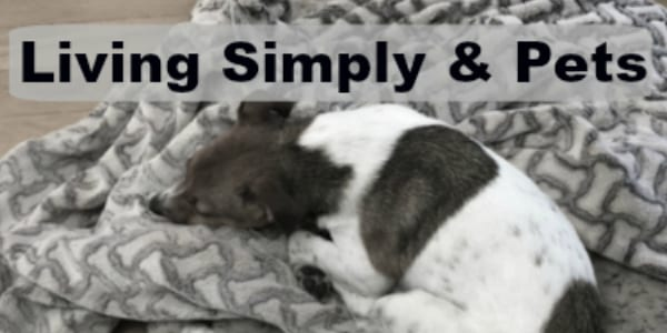Simple living and pets simply clearly for Minimalist living with pets